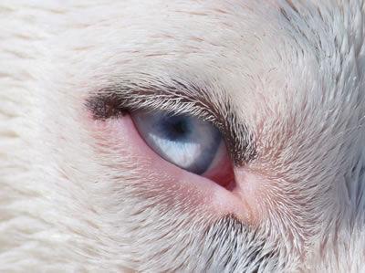furchild-pet-nutrition-10-signs-healthy-dog-08