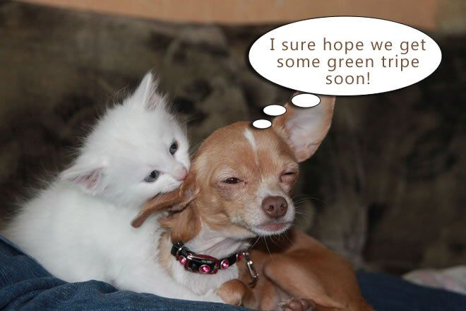 furchild-pet-nutrition-green-tripethe-ultimate-superfood-for-dogs-and-cats-01