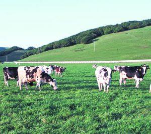 page-tripe-california-cows