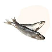 Wild-caught Minnows