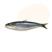 Sea-harvested wild sardine oil, a great source of omega-3 fatty acids, EPA and DHA to support healthy cells, skin and coat, joints, heart, brain, eyes and energy levels.