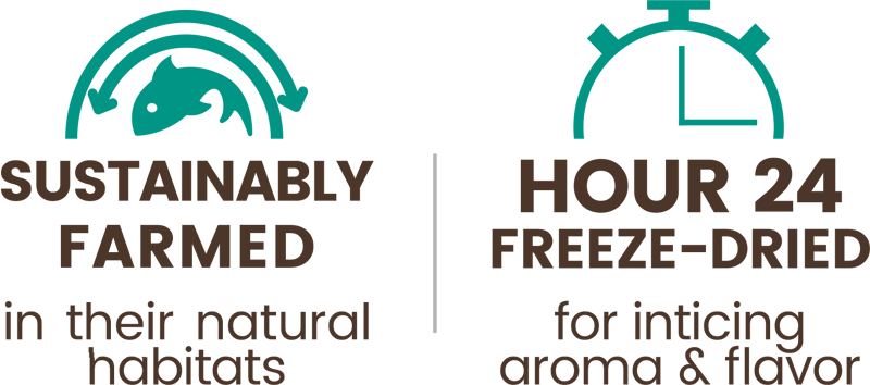 Premium Freeze-dried Green Lipped Mussel Treats